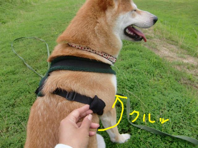 f:id:maki-mama:20090721092907j:image:w300