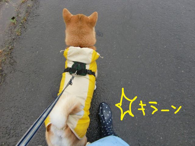 f:id:maki-mama:20090722130349j:image:w300