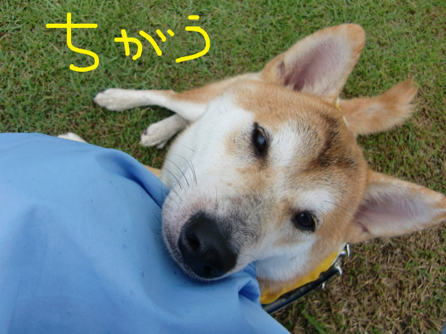 f:id:maki-mama:20090722130352j:image:w300