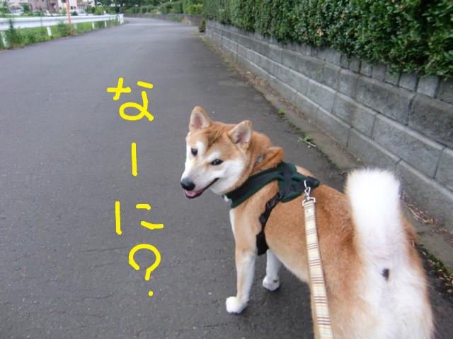 f:id:maki-mama:20090725101300j:image:w300