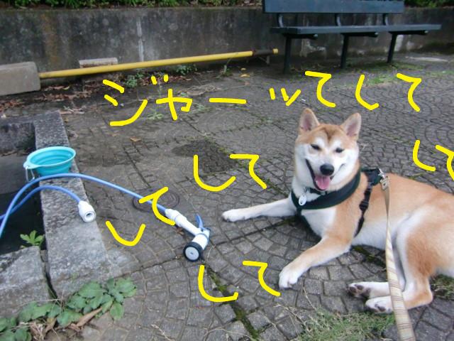 f:id:maki-mama:20090725101302j:image:w300