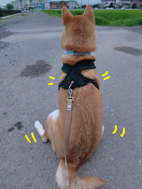 f:id:maki-mama:20090725101304j:image:w300