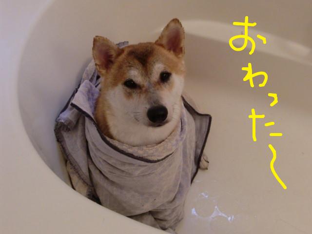 f:id:maki-mama:20090725170921j:image:w300