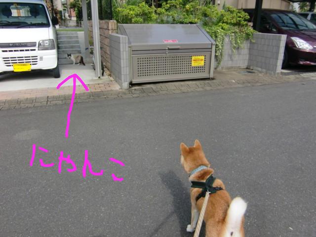 f:id:maki-mama:20090728084747j:image:w300