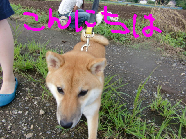f:id:maki-mama:20090728084751j:image:w300