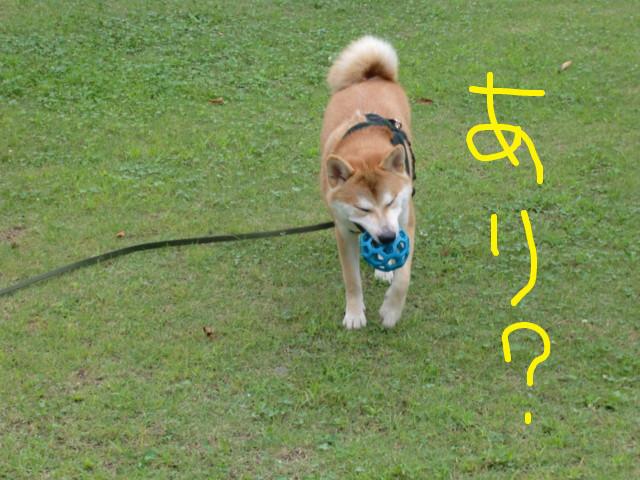 f:id:maki-mama:20090731120229j:image:w300