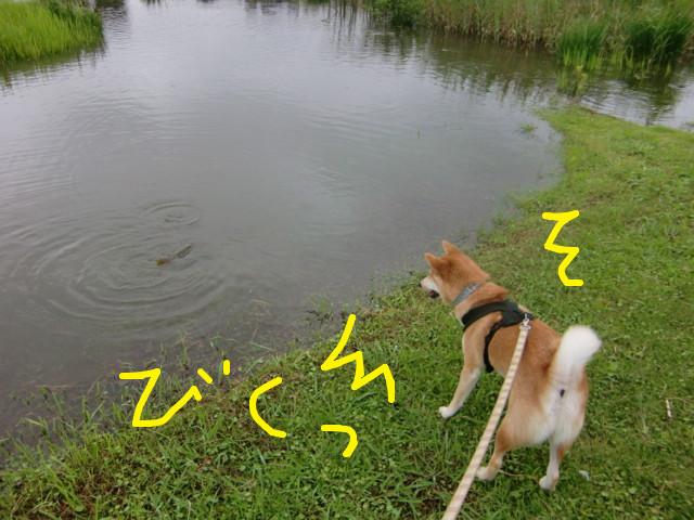 f:id:maki-mama:20090803120307j:image:w300