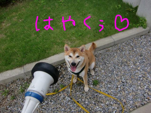 f:id:maki-mama:20090803120308j:image:w300