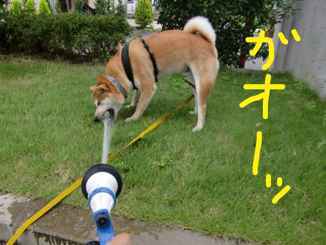 f:id:maki-mama:20090803120310j:image:w300