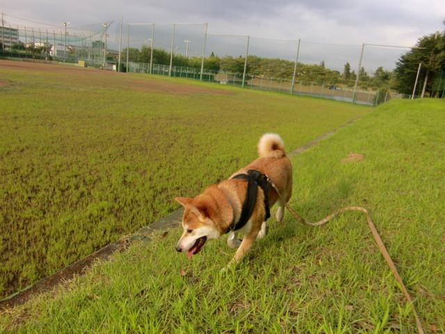 f:id:maki-mama:20090806122636j:image:w300