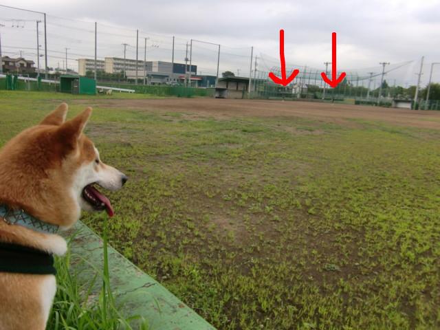 f:id:maki-mama:20090806122638j:image:w300