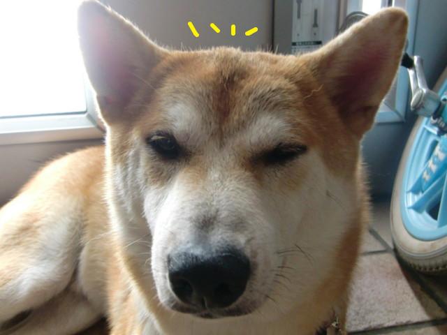 f:id:maki-mama:20090806124215j:image:w300