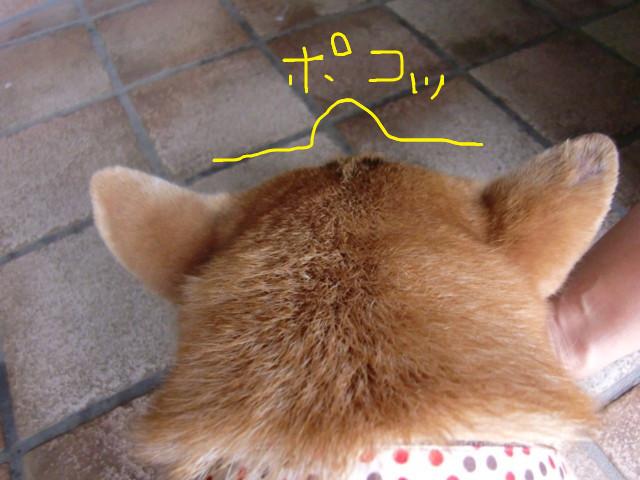 f:id:maki-mama:20090806125143j:image:w300