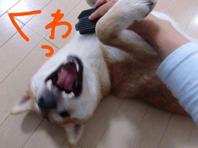 f:id:maki-mama:20090806155051j:image:w300