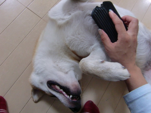 f:id:maki-mama:20090806155052j:image:w300