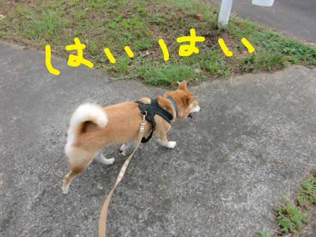 f:id:maki-mama:20090808124902j:image:w300