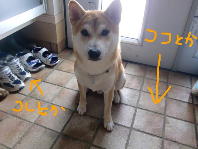 f:id:maki-mama:20090808162045j:image:w300