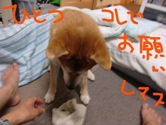 f:id:maki-mama:20090811102737j:image:w300