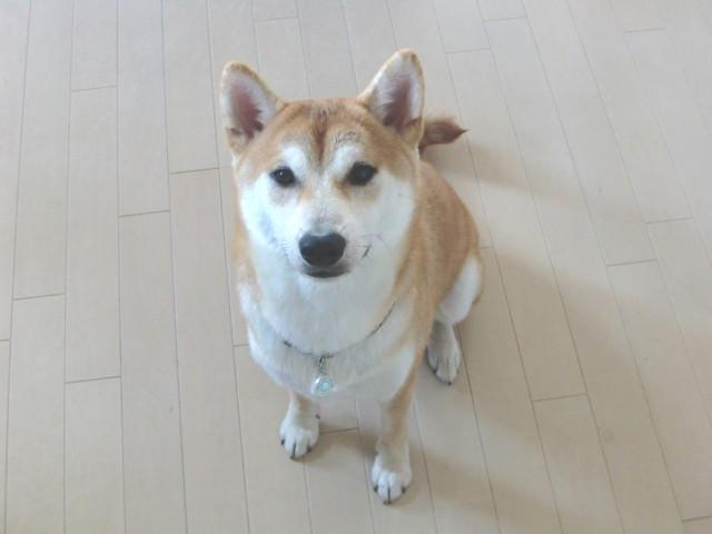 f:id:maki-mama:20090812210103j:image:w300