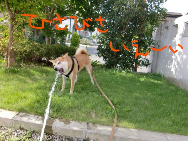 f:id:maki-mama:20090817120826j:image:w300