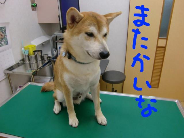 f:id:maki-mama:20090817120827j:image:w300