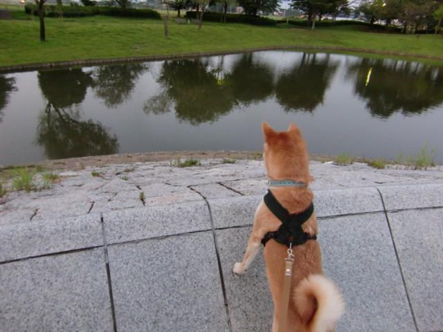 f:id:maki-mama:20090820172730j:image:w300