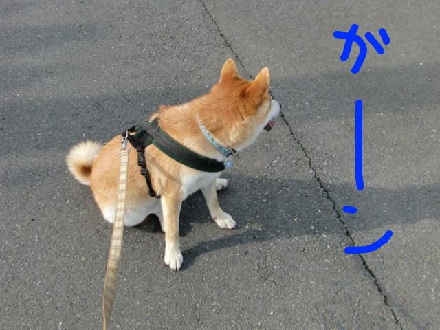 f:id:maki-mama:20090823172952j:image:w300