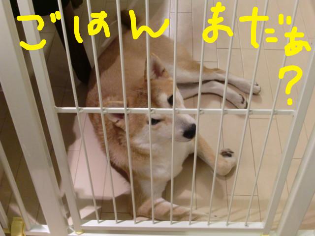 f:id:maki-mama:20090826222957j:image:w300