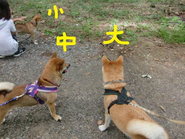 f:id:maki-mama:20090830130113j:image:w300