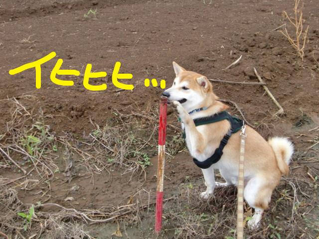 f:id:maki-mama:20090901120831j:image:w300