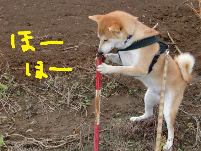 f:id:maki-mama:20090901120832j:image:w300