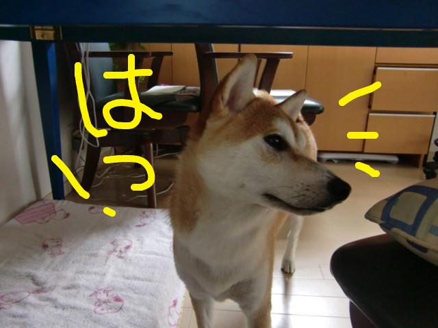 f:id:maki-mama:20090904124108j:image:w300