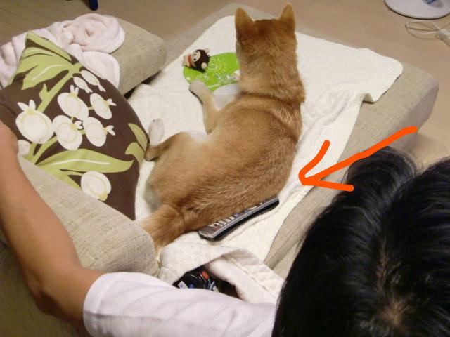 f:id:maki-mama:20090905124136j:image:w300