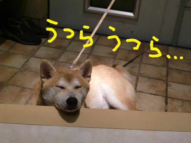 f:id:maki-mama:20090905221039j:image:w300