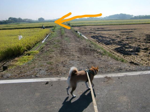 f:id:maki-mama:20090910121051j:image:w300