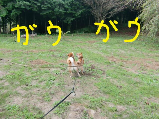 f:id:maki-mama:20090913190250j:image:w300