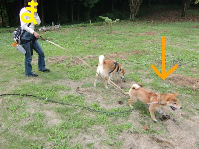f:id:maki-mama:20090913190251j:image:w300