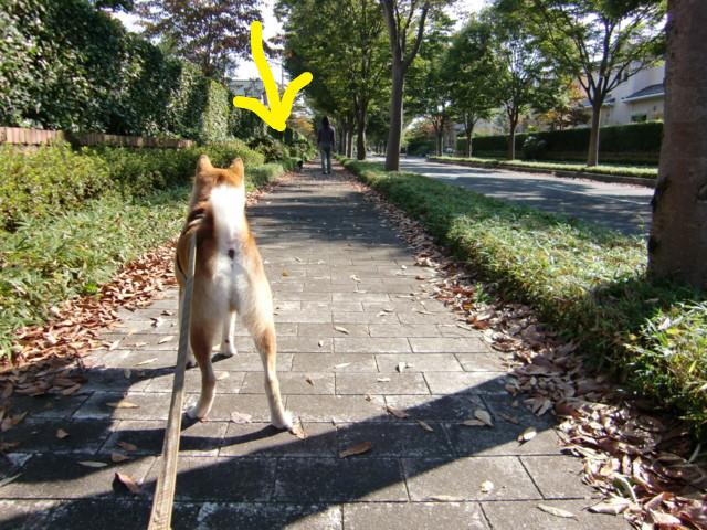 f:id:maki-mama:20090916160002j:image:w300