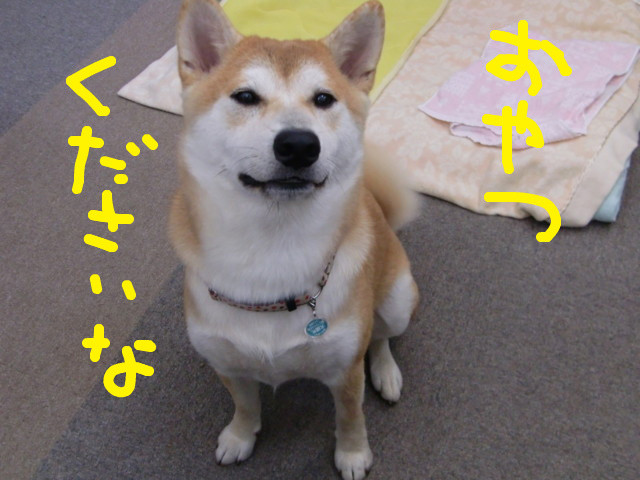 f:id:maki-mama:20090924154450j:image:w300