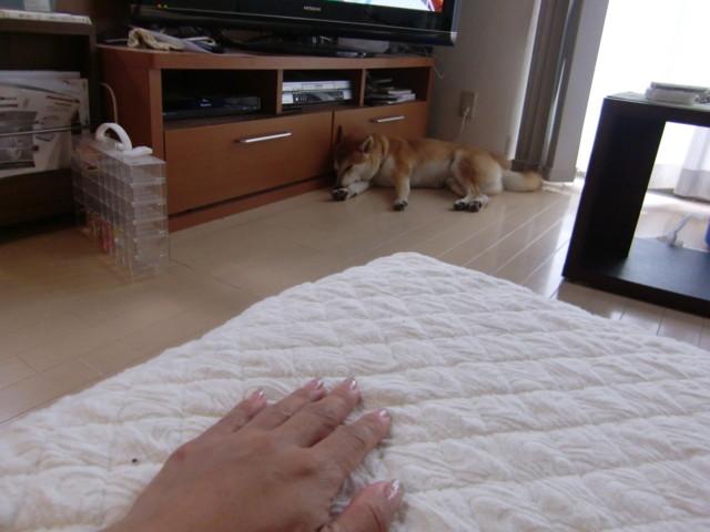 f:id:maki-mama:20091002114748j:image:w300