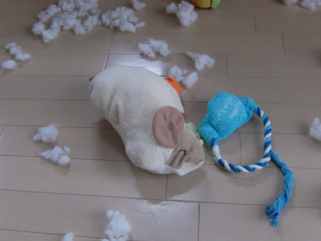 f:id:maki-mama:20091006113107j:image:w300