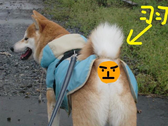 f:id:maki-mama:20091007100103j:image:w300