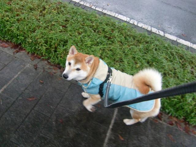 f:id:maki-mama:20091007100104j:image:w300