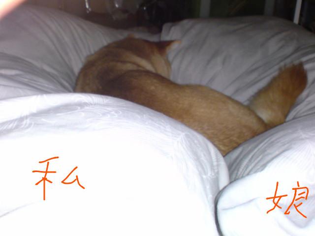 f:id:maki-mama:20091012130430j:image:w300