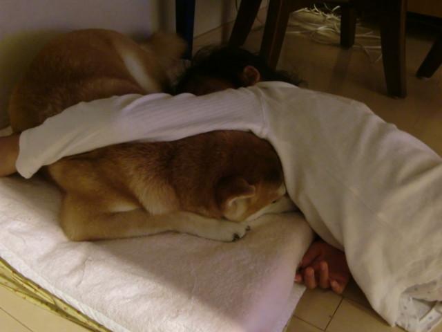 f:id:maki-mama:20091012132219j:image:w300