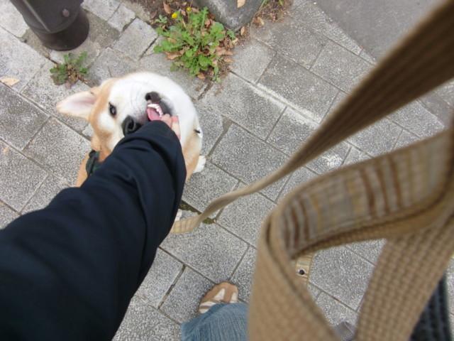 f:id:maki-mama:20091017145408j:image:w300