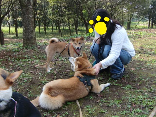f:id:maki-mama:20091019145806j:image:w300