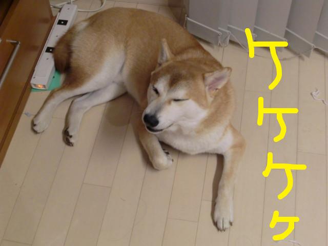 f:id:maki-mama:20091030203911j:image:w300