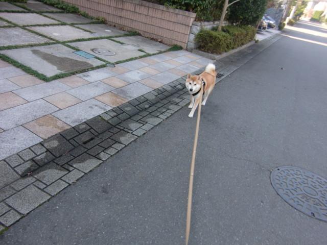 f:id:maki-mama:20091106154501j:image:w300