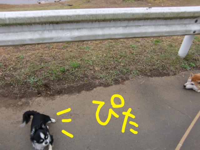 f:id:maki-mama:20091110132458j:image:w300